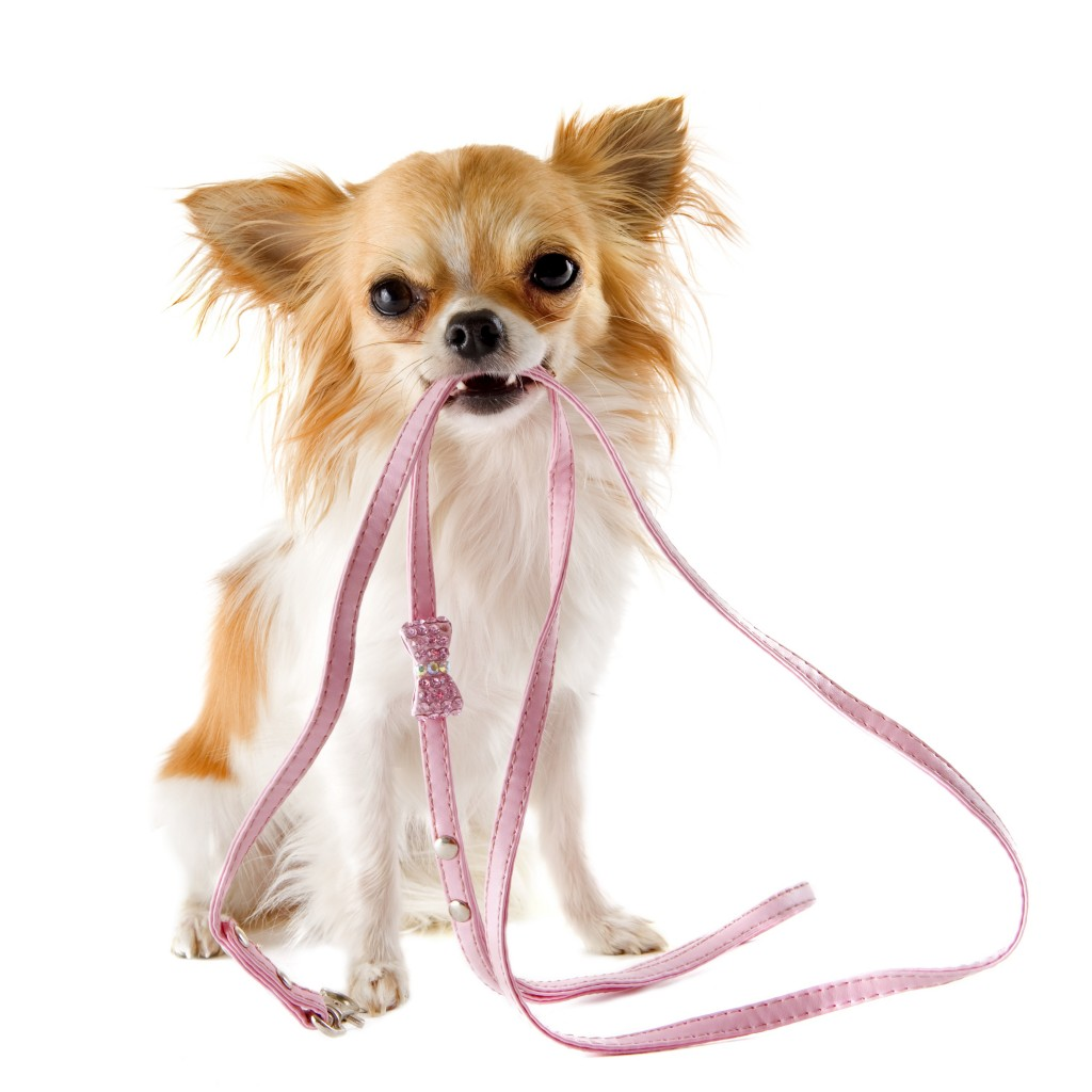 Chico & Co. provides professional dog walking and pet sitting services  in Toronto